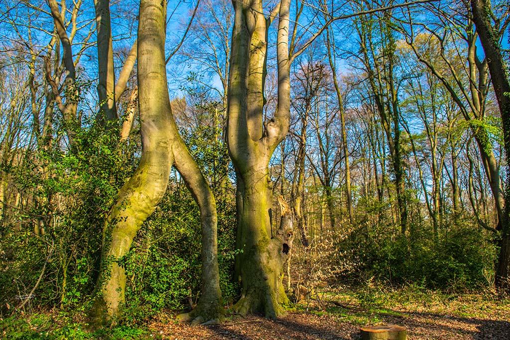 Baum mit zwei Stämmen
