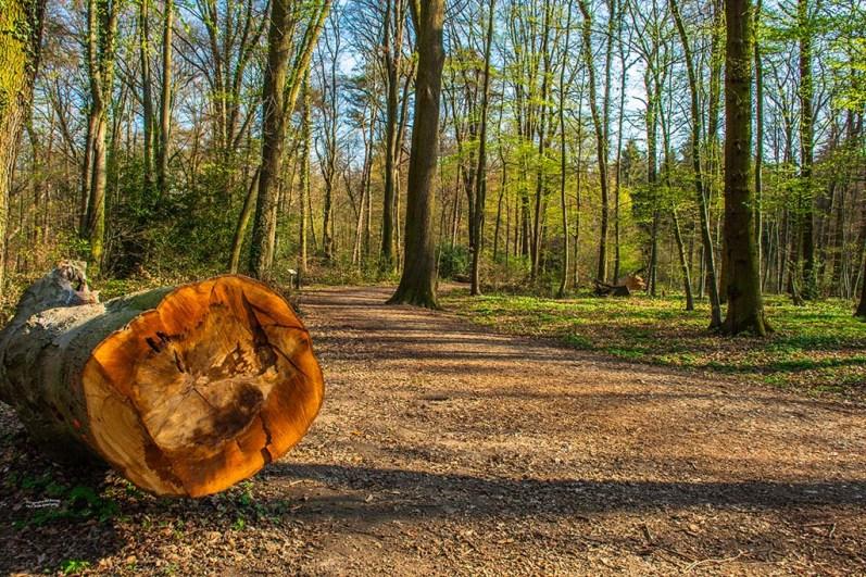 Baumstamm auf dem Waldweg