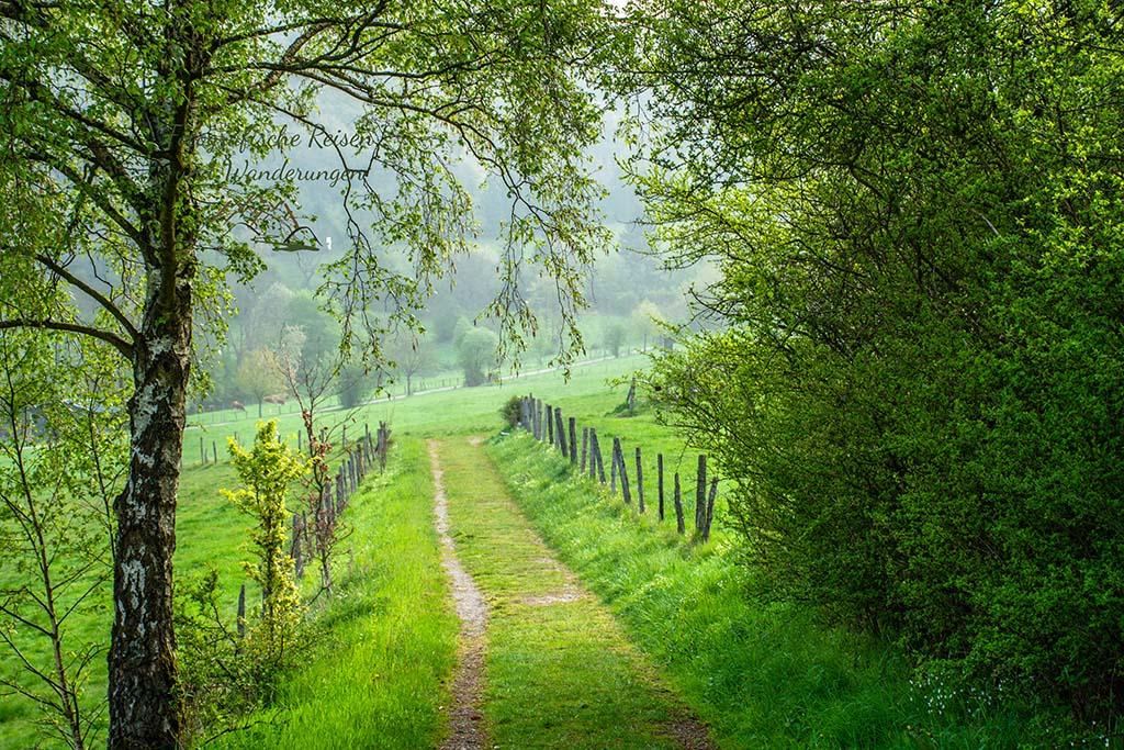 Wiesenweg- Eifelsteig wandern