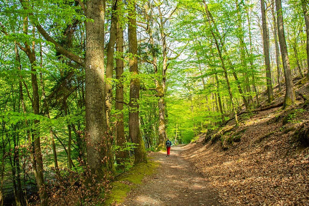 Heller Waldweg
