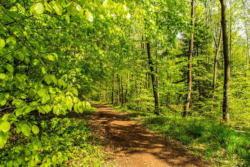 Das helle Grün des Frühjahrs, einfach göttlich