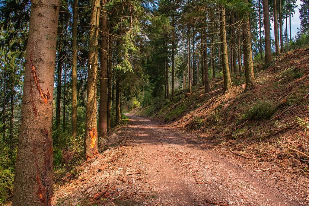 Ein angenehm breiter Waldweg - Eifelsteig zwischen Monschau und Einruhr