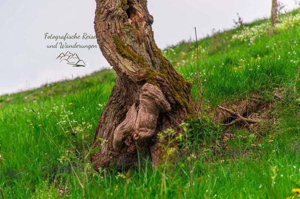 Skurrile Bäume