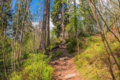 Schmale felsige PFade - Eifelsteig zwischen Monschau und Einruhr