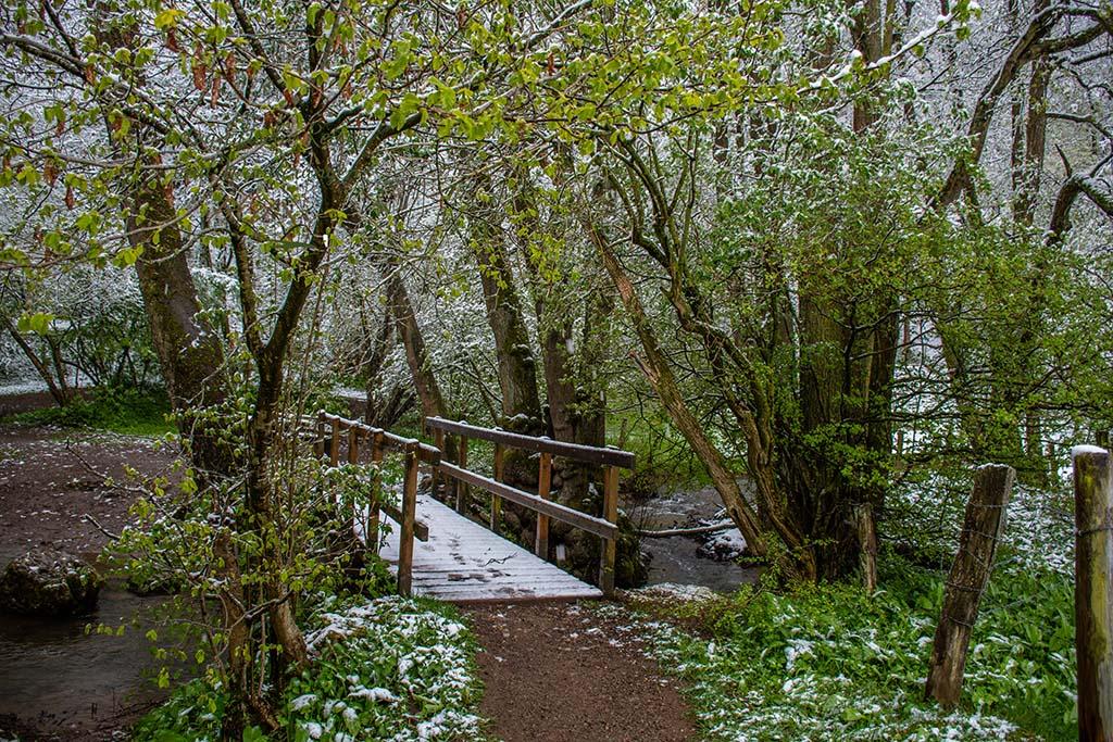 Brücke über den Gillesbach - Winter im Mai auf dem Eifelsteig