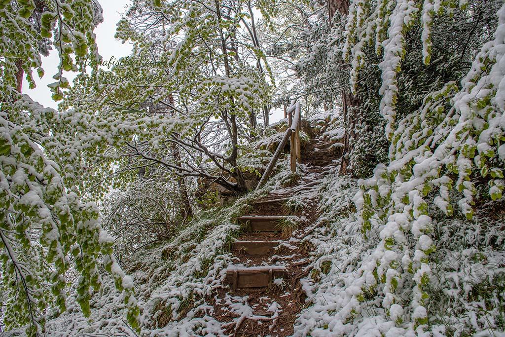 Treppenstufen zum Eifelblick Königsberg - Winter im Mai auf dem Eifelsteig