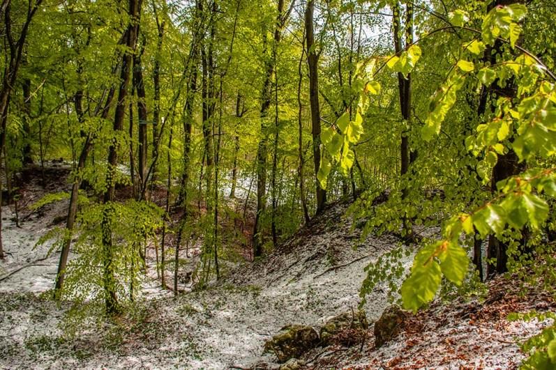 Der Schnee weicht - Winter im Mai auf dem Eifelsteig