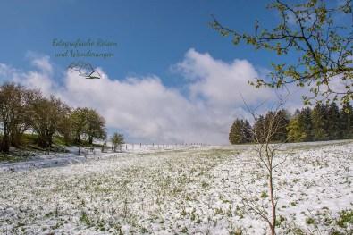 Blauer Himmel, Schnee, grüne Wiese