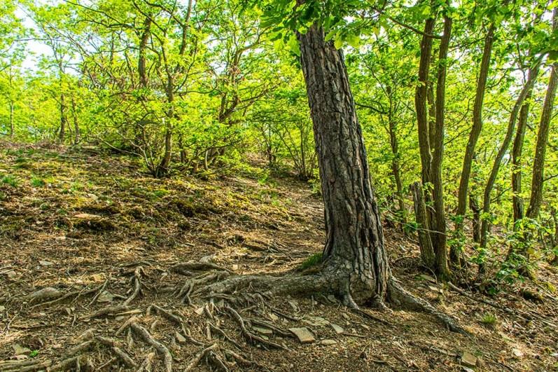Waldwege - Abenteuer Wanderung im Sahrbachtal