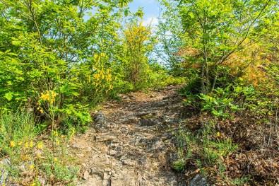 Felswege - Abenteuer Wanderung im Sahrbachtal