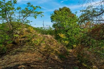 Himmlische Wege - Abenteuer Wanderung im Sahrbachtal