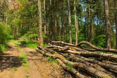 Holz liegt hier mehr, als es steht