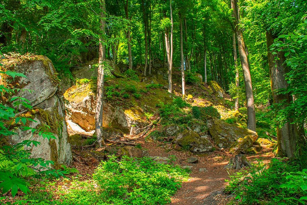 Wald und Felsen