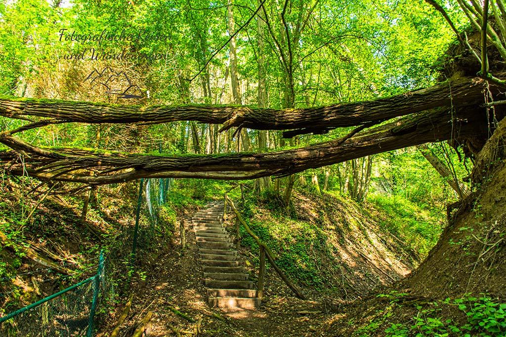 Holztreppe im Wald- Traumpfaedchen Löfer Rabenlaypfad