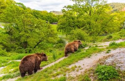 Zwei Bären Wild- und Freizeitpark Westerwald