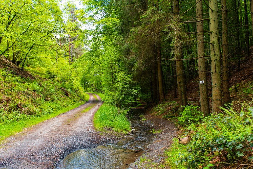 Weg am Seelbach - Wäller Tour Buchfinkenland