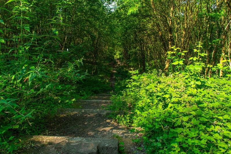 Grüne Oasen im Ruhrgebiet - Halde Rheinelbe