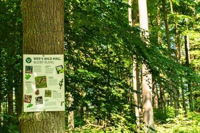 Infotafel zu Bäumen im Wald - Panoramaweg Frücht