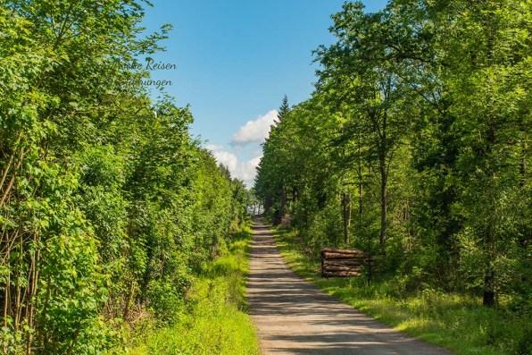 Schon wieder ein breiter Forstweg