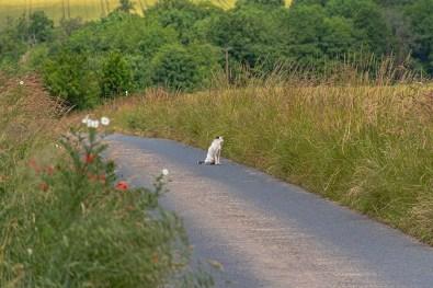 Eine KAtze auf dem Teerweg