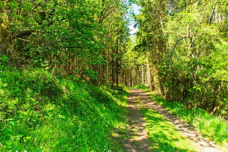 Himmlische Waldwege zur Wacholderheide in der Eifel