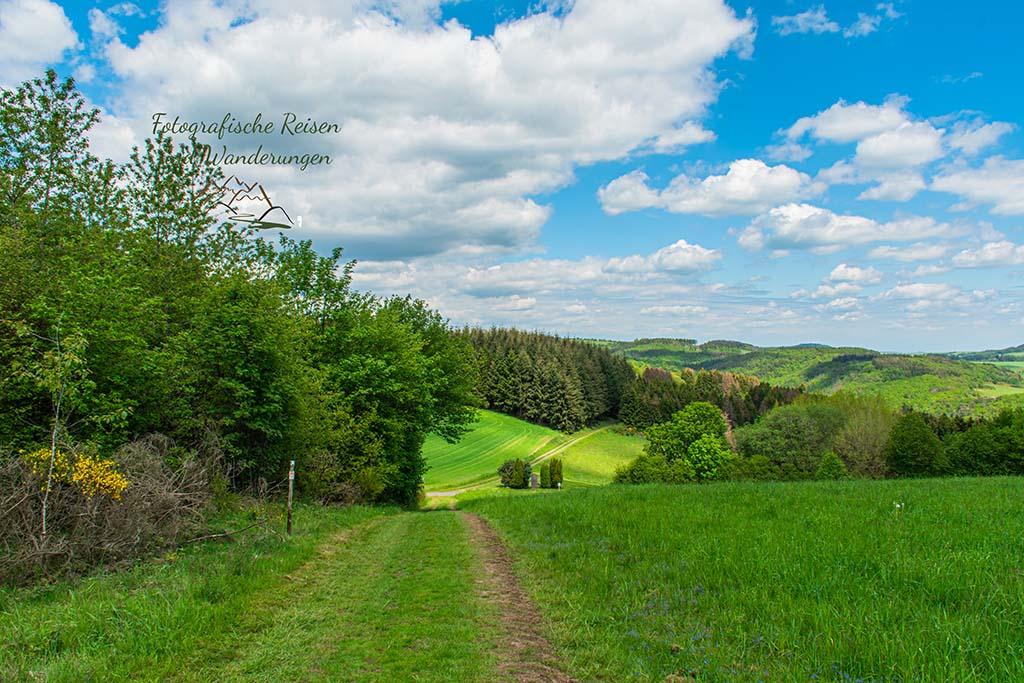 Weg von der er Wacholderheide in der Eifel