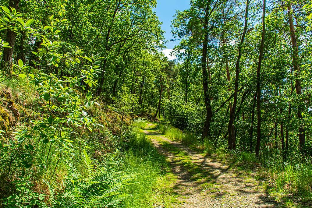 Auf diesem Weg erreiche ich das Ziel in Heyweiler