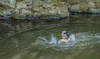 Shaggy im Wasser