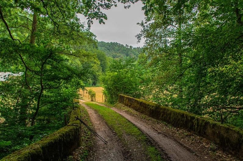 Brücke Moos, alt, wunderbar