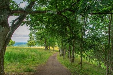 Auf dem Weg zum Weinfelder Maar