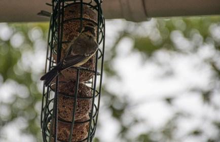 Was ist ein Ästling und was ein Nestling?
