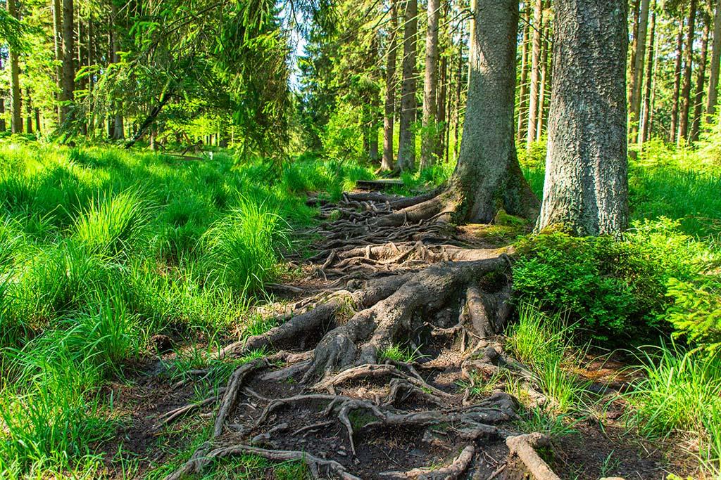 Helles Grün auf dem Pfad- Zwischen Haus Ternell und Kutenhartvenn