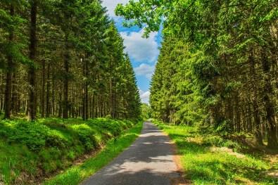 Teerweg durch herrlichen Nadelwald