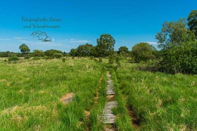 Nur hin und wieder Stege über dem Moor im Venn