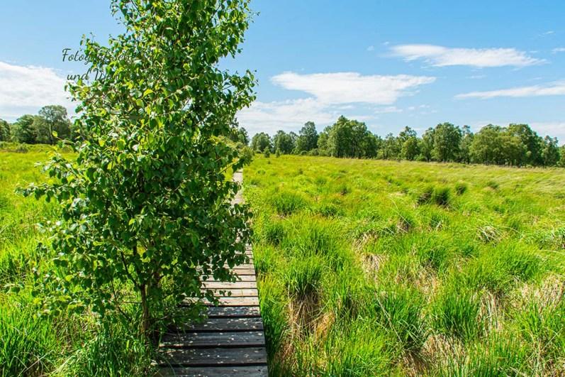 Auch hier sind die Wege teilweise mit jungen Birken zugewachsen
