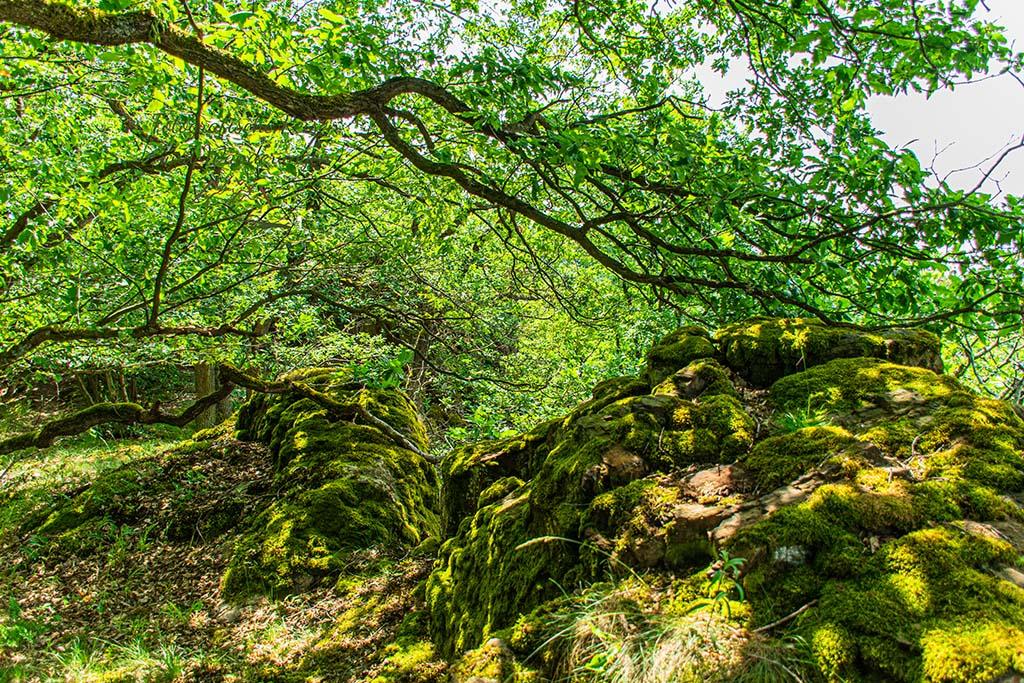 Die Küppeltour im Lahntal - Moos auf Steinen