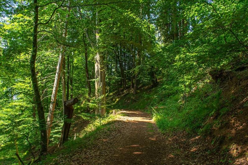 Rund um den Windsborn Kratersee (67)