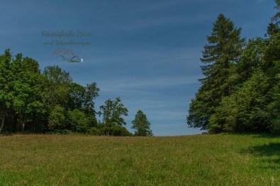Rund um den Windsborn Kratersee (68)