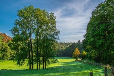 Wiesenlandschaft im Naafbachtal