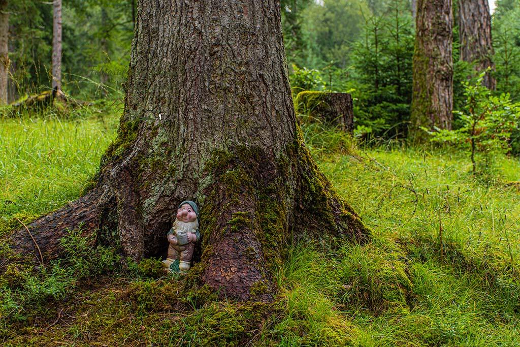 Der Zwerg im Baum