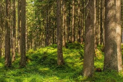 Wald Richtung Eibseeblick - Hochthörle Hütte
