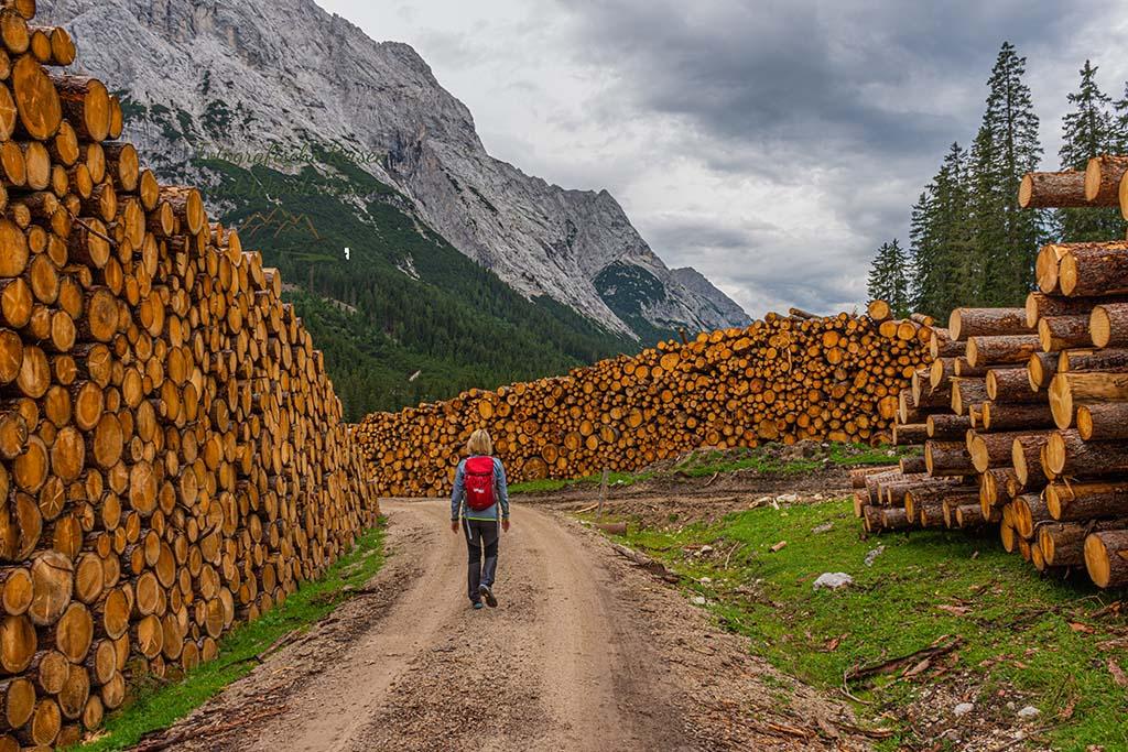 Mitten im NAturparadies Gaistal - Viele gefällte Bäume