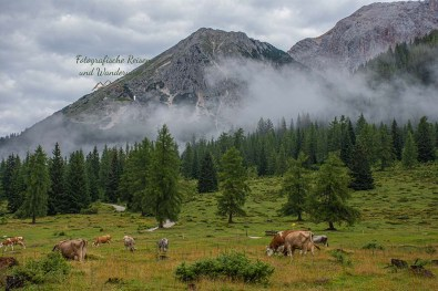Buckelwiesen mit Rindern