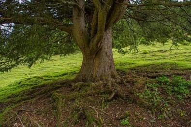 Naturparadies Gaistal - Alter ehrwürdiger Baum