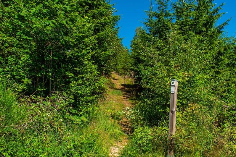 Wandern im Siegerland - Schmaler Wiesenpfad