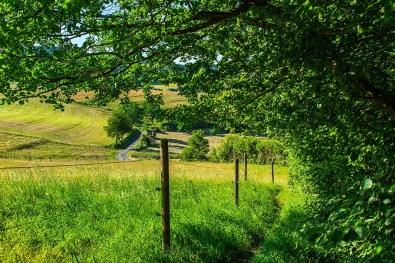 Wandern im Siegerland Schmaler PFad an Wiese