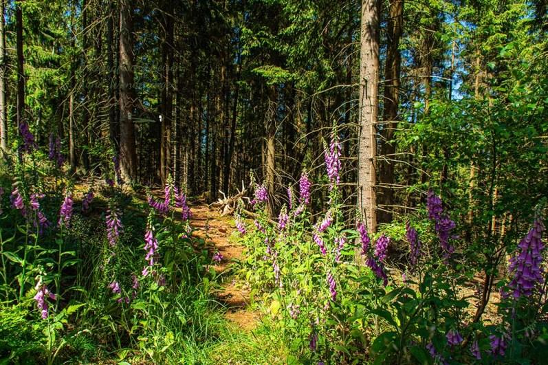 Wandern im Siegerland auf Pfaden durch den Wald