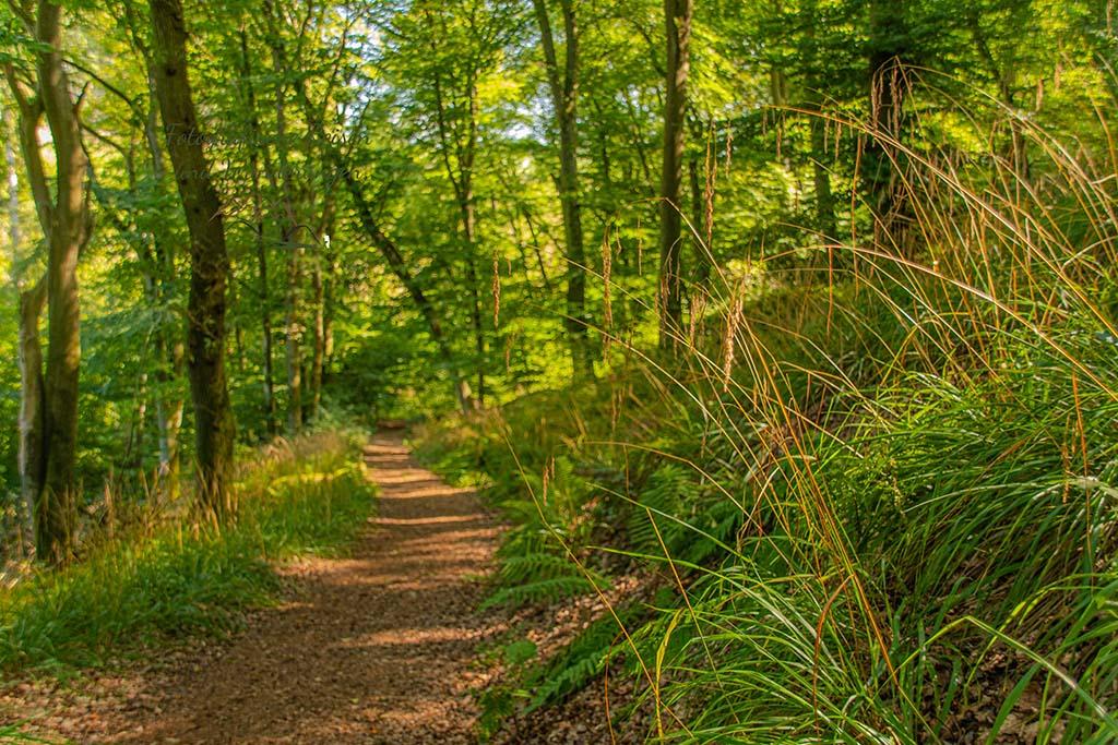 Herrlicher Waldweg