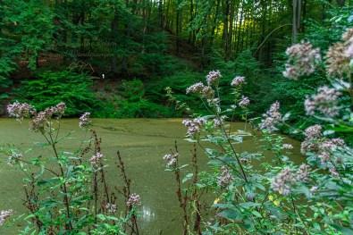 Der grüne Teich - Vom Teufelsberg zur Caaner Schweiz