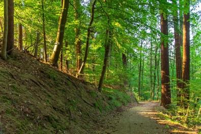 Licht und heller Waldweg - Vom Teufelsberg zur Caaner Schweiz